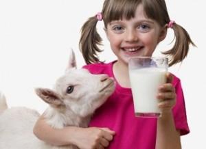 Козье молоко - полезный продукт для всего организма
