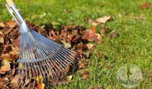 Убираем газон с помощью веерных граблей