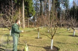 Деревья обязательно необходимо опрыскать мочевиной
