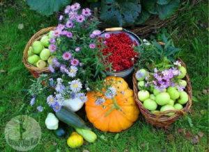 Сентябрьские работы в саду и огороде