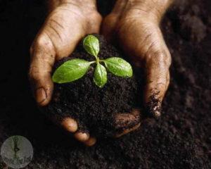 Поддержка плодородия почвы