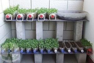 Выращивание овощей в контейнерах