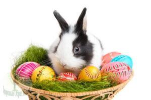 Пасхальный кролик в корзинке с яйцами