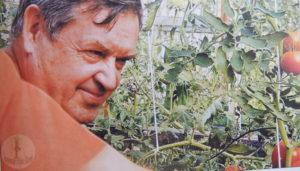Сбор томатов со своего огорода